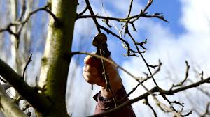 How To Make Your Job Easier With Tree Lopping Services?
